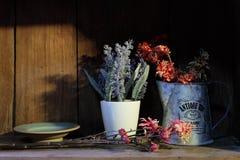 Flowerpots na drewnianej półce Fotografia Royalty Free