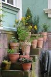 Flowerpots na stairback Obraz Royalty Free