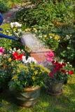 flowerpots nowy rośliien target1217_1_ Fotografia Stock