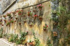 Flowerpots Stock Image