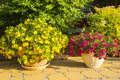 Flowerpots in the park. Stock Photography