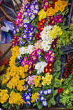 Flowerpots and Primroses just blossomed Stock Images