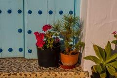 Flowerpots przy wejściem dom Obrazy Royalty Free