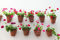 Flowerpots and red flower on a white wall with copy space for te Stock Photos