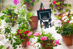 Flowerpots and red flower on a white wall with vintage lantern. Stock Photos