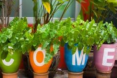 Flowerpots Royalty Free Stock Photography
