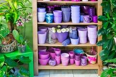 Flowerpots in a shelf in a market Stock Photos