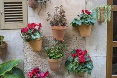 flowerpots street in the tourist island of Mallorca, Valdemosa c Royalty Free Stock Photos