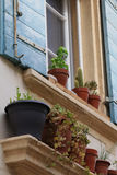 Flowerpots window 2 Royalty Free Stock Images