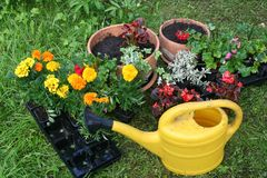 Flowerpots and yellow watering can Royalty Free Stock Photography