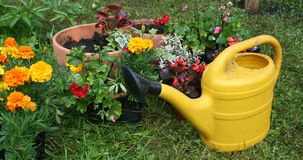 Flowerpots and yellow watering can Royalty Free Stock Photo