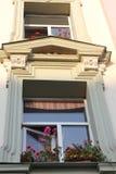 Flowerpots z bodziszka okno Obrazy Stock