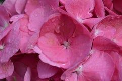 FLOWERPOWER Arkivbild