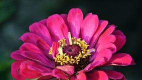 FLOWERPOWER Lizenzfreies Stockbild