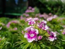 FLOWERPOWER Fotos de Stock
