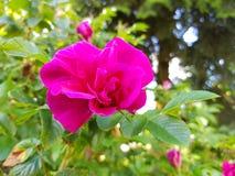 FLOWERPOWER Imagens de Stock Royalty Free