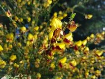 FLOWERPOWER Imagem de Stock
