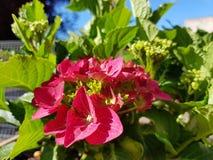 FLOWERPOWER 图库摄影