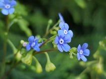 Flowerpower stock photography
