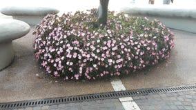 Flowerpromenade royalty-vrije stock foto
