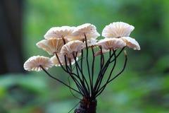 flowerr het meest fungiforest Royalty-vrije Stock Afbeeldingen