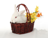 flowerrr królik. Zdjęcia Royalty Free