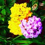 Flowers†‹ Στοκ εικόνα με δικαίωμα ελεύθερης χρήσης