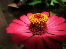 FlowersAreRed& x22 ; est une chanson écrite et chantée par Harry Chapin Photos stock