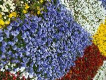 Flowers in Ōdōri Kōen Stock Image