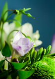 Flowers_03 Stock Photos