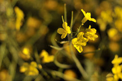 Flowers-1 Imágenes de archivo libres de regalías
