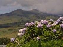 Flowers. Azores landscape view with flowers Royalty Free Stock Photos