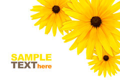 Free Flowers Royalty Free Stock Photography - 10346787