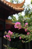 Flowers. The flowers in front of Chinese architecture Stock Photography