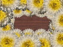 Flowers. Wood deck under white flowers stock image