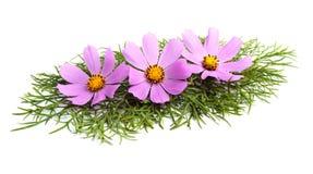 flowers стоковые изображения rf
