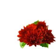 Free Flowers Stock Image - 11269161