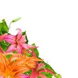 flowers Arkivbild
