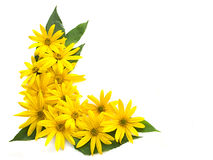Flowers. Yellow flowers and green leaves Stock Photo