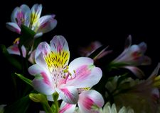 Flowers. Isolated on black background Stock Photography