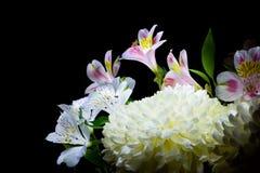 Flowers. Isolated on black background Stock Photos