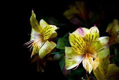 Flowers. Isolated on black background Stock Image