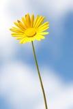 flowers στοκ φωτογραφία
