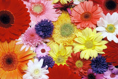 Flowers. Details of selection of cut flowers royalty free stock photography