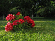 Flowers. Are in a garden Royalty Free Stock Photos