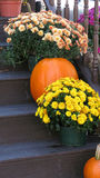 Flowers. Beautifully yellow and orange flowers on house steps with pumpkins Stock Photos