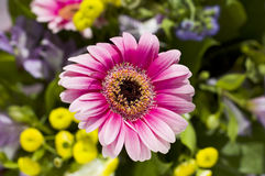 Flowers. Flower closeup on colourful background royalty free stock photography