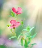 Flowers. In the light of the rising sun Stock Photography