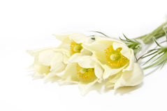 Free Flowers Royalty Free Stock Image - 14600786