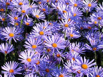 Flowers. Summer flowers stock image